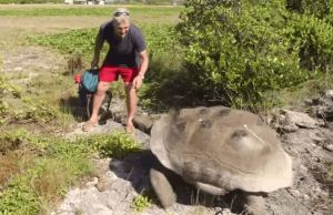 That Happens When You Interrupt Tortoise Coitus very slow chase