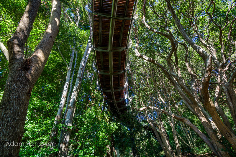 Walk Above The Trees in Cape Town