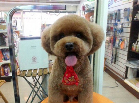 Dogs Are Having Square/Round Heads Haircuts