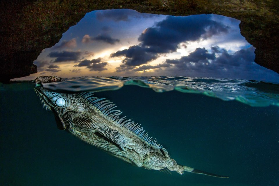 The 12th Annual Smithsonian Photo ContestWinners
