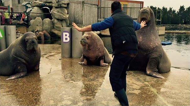 zookeepers-recreating-jurassic-world-raptor-scene-10__605