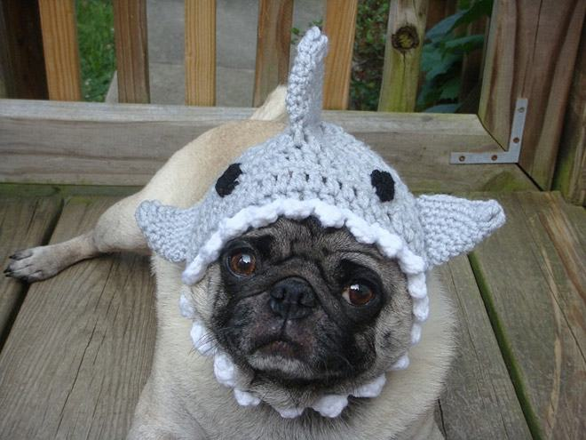 hat-shark-1