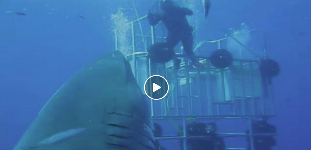 The Biggest Great White Shark Ever Filmed