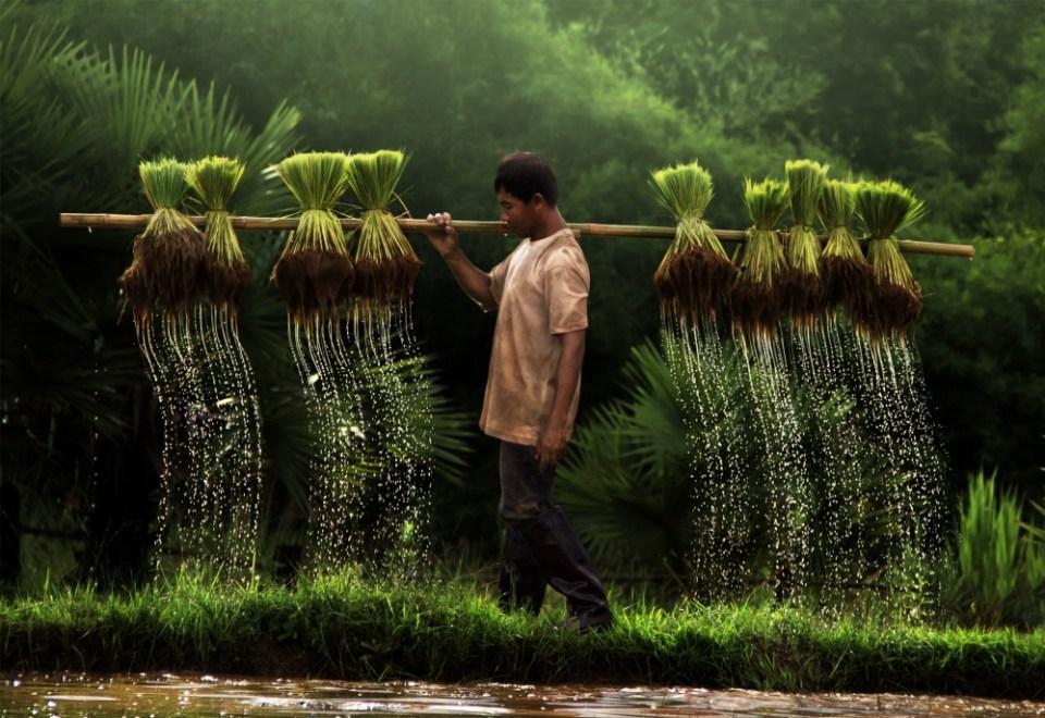 Farmer, Vietnam