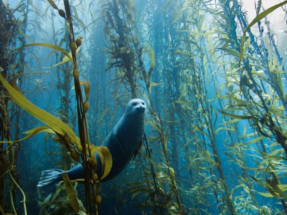 Curious Seal,USA