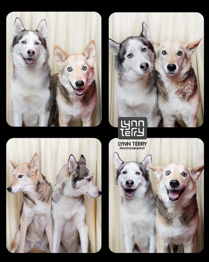 Photobooth for Dogs