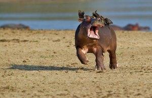 Comedy Wildlife Photography