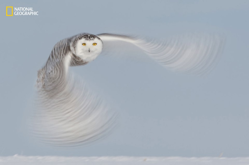 2016 National Geographic Nature Photographer of the Year Contest