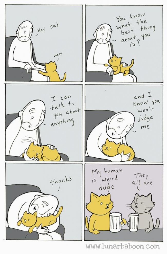 Comic Strips About The Life of Cats