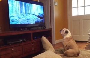Dog Tries to Save Leonardo DiCaprio
