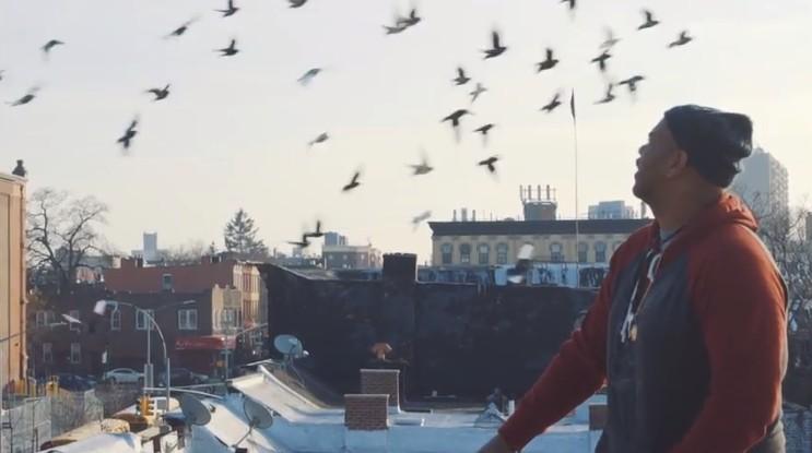 Rooftop Pigeons
