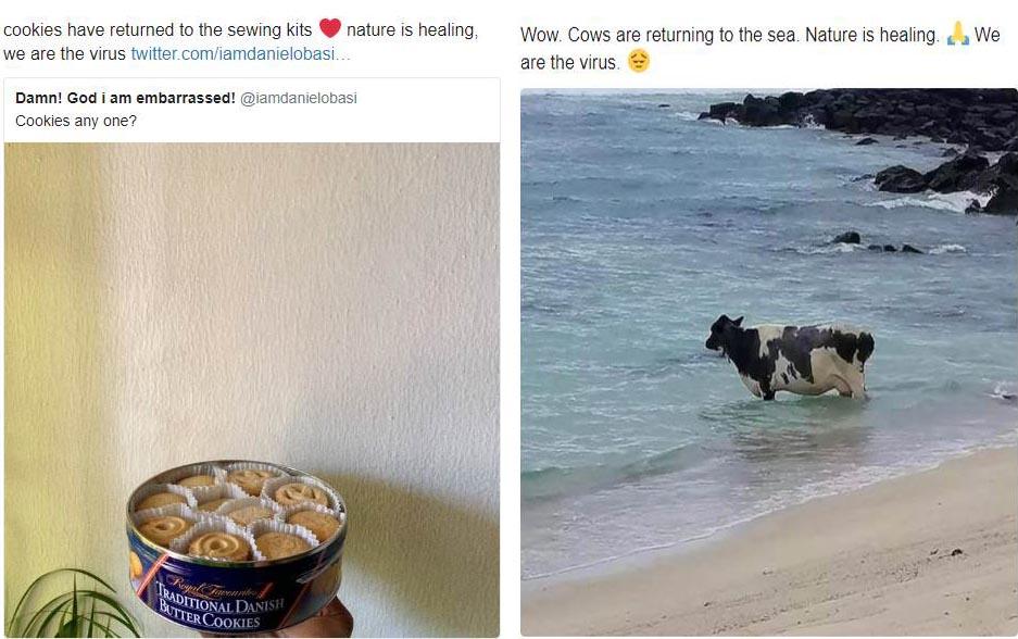 Whimsical Memes on Coronavirus Misinformation