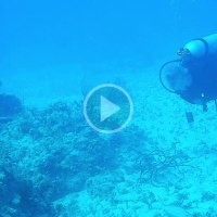 Scuba Divers Pinged by a Submarine Sonar and Its Bizarre