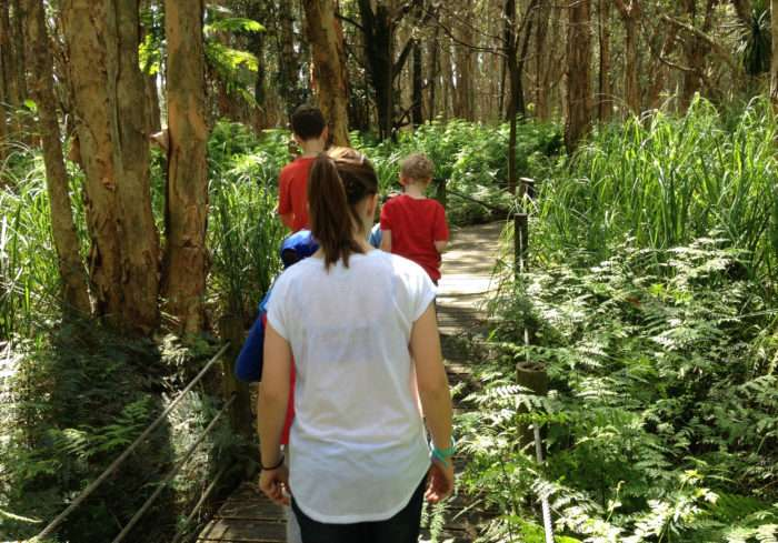 Collect animal footprints - going on a bushwalk