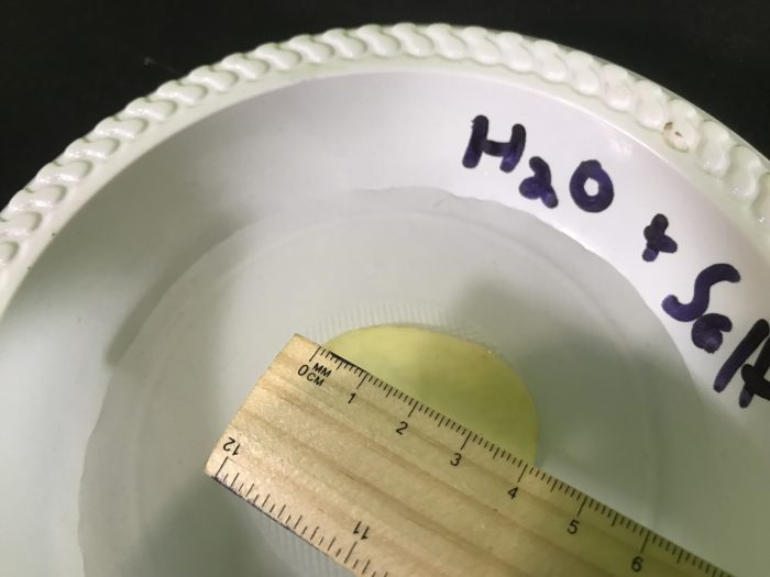Shriveling potato science science experiment - final measurement