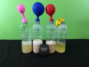 Yeast growth science experiment - final result