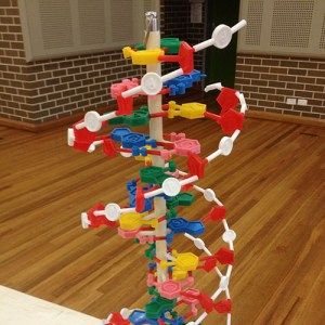Plastic DNA model on a table