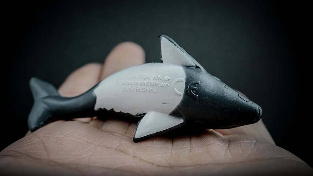 Toys & Hobbies Australian Animal Southern Right Whale Small Replica