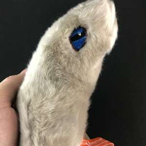Toxoplasmosis giant microbe different view