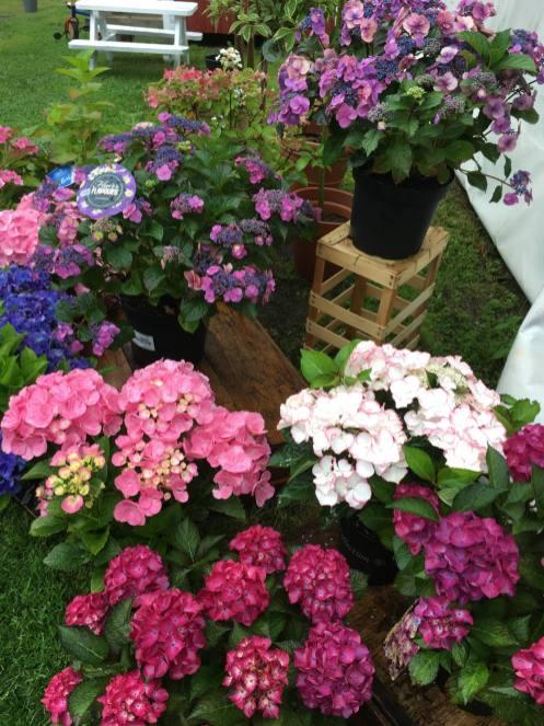 Blommor i massor hos Härnevi plantskola