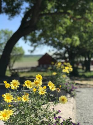 Country Berga Flowers