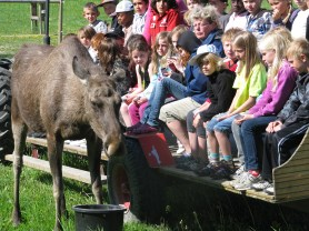 Visitorsget close with the moose