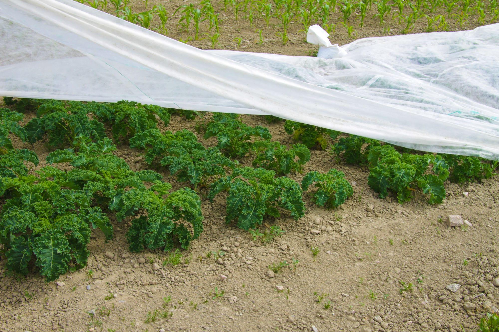 Vegetables on garden round Tuva & Täppa