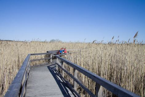 A long footbridge runs through the reeds