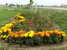 Nayab City Multan Central Park spring flowers (4)