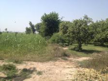 Fatima Jinnah Town Multan G Block - 17 Kassi Minor Road Garden 2