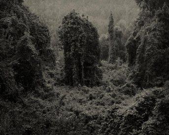 Helene Schmitz - l'invasion du Kudzu