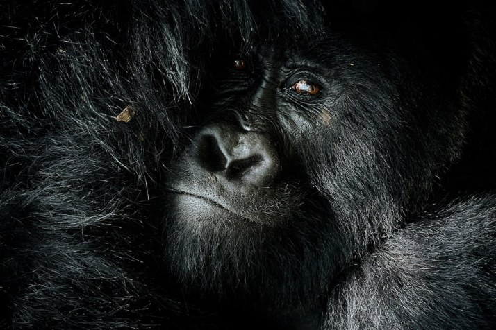 africanparks-1