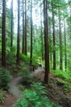 trees in Portland
