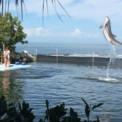 Getting Up Close & Personal: Dolphin Research Center