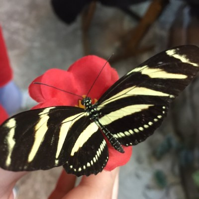 Breathtakingly Beautiful Butterflies (Review & Printable)