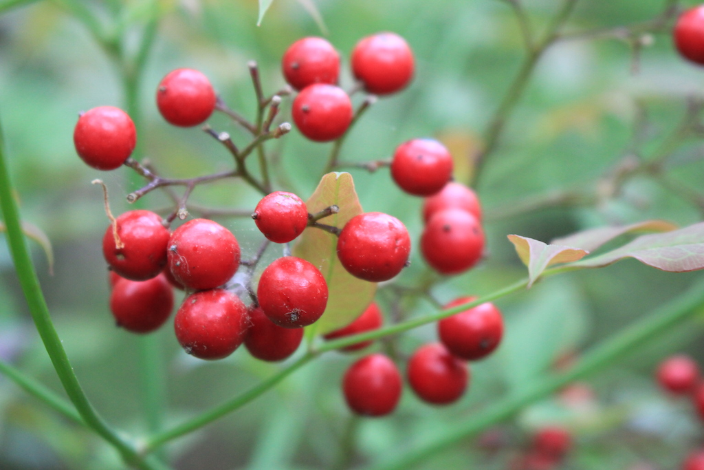 Photo Safari - Wild Berries