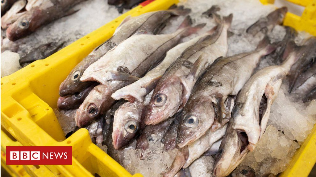 Fishing: Why is fishing important in Brexit trade talks?