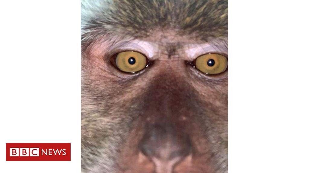 Malaysian man 'finds' monkey selfies on lost phone