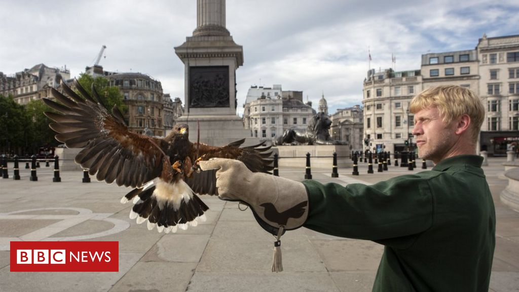 The falconer and the lock keeper: The unlikely key workers