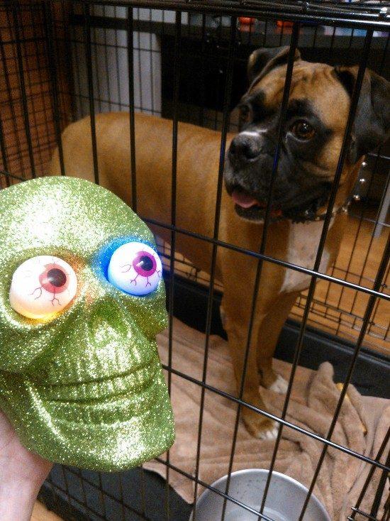 DIY Light Crafts: Add Light Clips To Halloween Glitter Skulls!