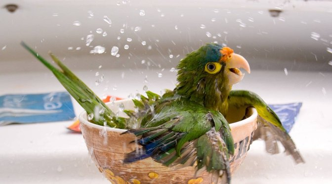 Choosing the Best Parrot Cage