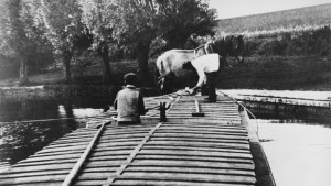 Black and white photo of a horse on a barge being poled across the River Stour