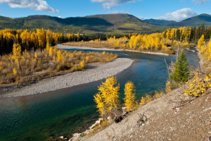North Fork of the Flathead River Photo Credit: Jan Wassink