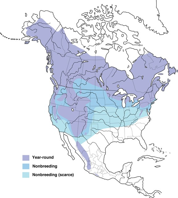 Northern Goshawk Range Map