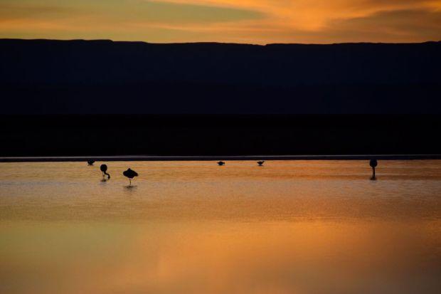 Reserva_dos_Flamingos_Atacama_15