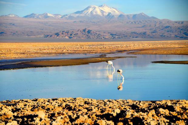 Reserva_dos_Flamingos_Atacama_4