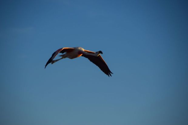 Reserva_dos_Flamingos_Atacama_6