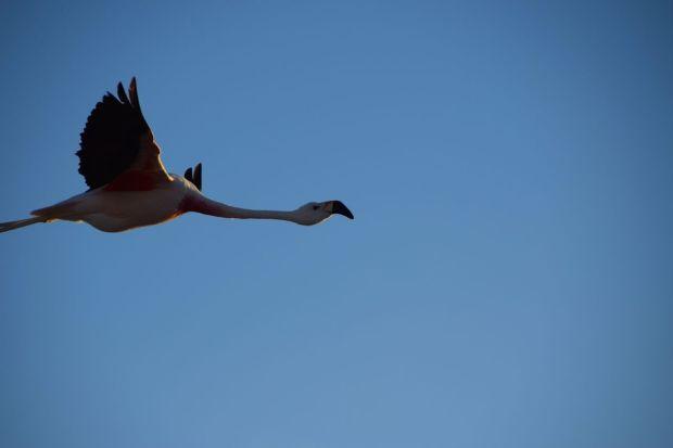 Reserva_dos_Flamingos_Atacama_7