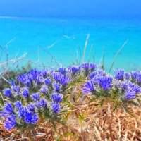 Nea Kallikrateia Coast - Flowers