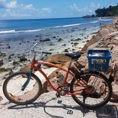 Ride a bicycle til the end of the road. Stop: Anse Fourmis, La Digue